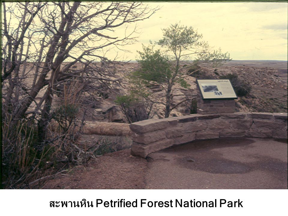 สะพานหิน Petrified Forest National Park
